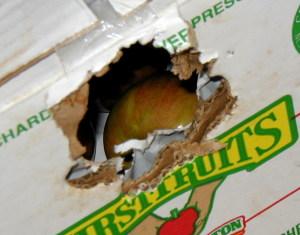 chewed box